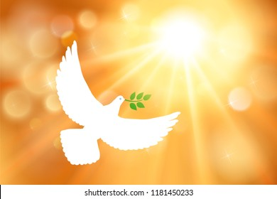 White dove carrying leaf branch and international day of peace. World Water Day. Vector image, sun, sun rays and golden blurred defocused background with bokeh gold ligth.