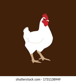 White farm chicken vector illustration with brown background