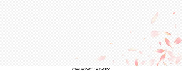 White Floral Vector Panoramic Transparent Background. Confetti Graphic Poster. Petal Blur Congratulation. Blooming Beauty Pattern. Red Peach March Illustration.