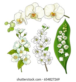 White flower set - lily of the valley, orchid, apple and cherry blossom, isolated sketch vector illustration. Realistic hand drawing of white flowers, lily of the valley, orchid, apple, cherry blossom
