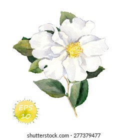 White flower. Vector watercolor - retro botanical illustration