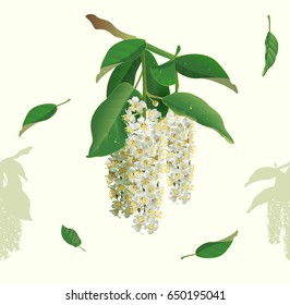 White flowers of bird cherry tree seamless background. Bird cherry blooms. Vector nature illustration