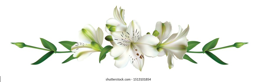 White flowers. Floral background. Leaves. Lilies.