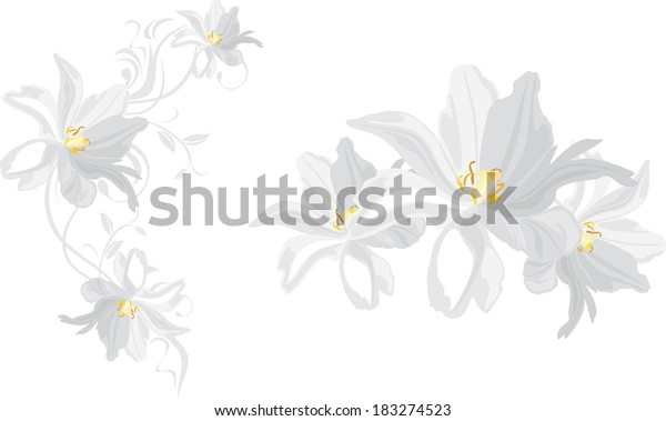white-flowers-isolated-on-vector-600w-18