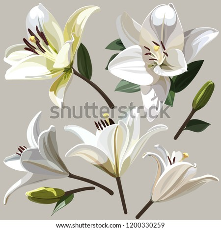 White flowers of Lily