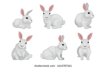 White Fluffy Rabbit in Different Poses Vector Set