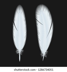 white fluffy twirl feathers vector