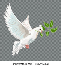 White flying dove with branch.