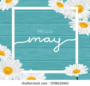 White frame on blue wooden background and daisy chamomile flowers illustration - Hello May.