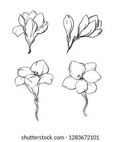 Freesia Outline Images Stock Photos Vectors Shutterstock