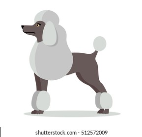 White french poodle in stand on white background. Dog icon or logo element. Vector illustration in flat style. Side view standard poodle design. Cartoon dog character, pet animal.