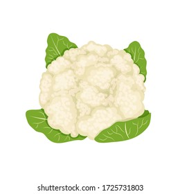 White fresh cauliflower, cabbage on white background, healthy food, vegetables vector icon.