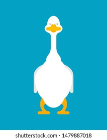White goose front view isolated. domestic waterfowl. vector illustration