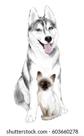 White And Gray Adult Siberian Husky Dog and Thai Kitten are Friends. House pets.