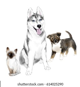 White And Gray Adult Siberian Husky Dog, Pooch Puppy and Thai Kitten are Friends. House pets.