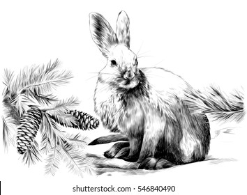 a white hare on snow with fir tree branches and cones vector sketch black and white