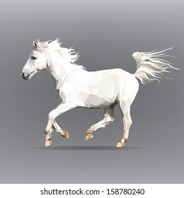 white horse isolated on a gray background