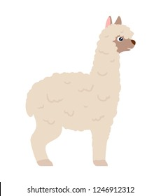 White lama alpaca, side view vector illustration, white background isolated.