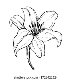 White lily bouquet flower flower blossom. Isolated vector botanical illustration: retro, vintage, hand drawn, black and white, outline. For wedding invitation, card, print, tattoo. Japanese style.