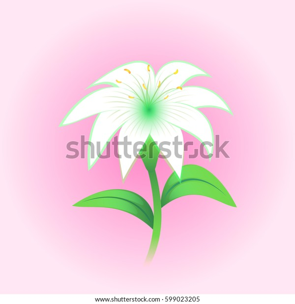 White lily flower, vector