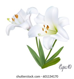 White lily isolated on white background close up. Photo-realistic mesh vector illustration.