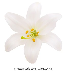 White lily. Photo-realistic Vector illustration. Isolated on white