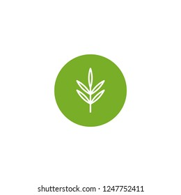 white line rosemary twig, shoot, sprig in green circle isolated on white. eco company, agriculture, nature firm, ecology, healthy organic and farm fresh food. Vector Illustration. kitchen herbs icon