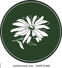 White logo chamomile flower on a dark green background. Celtic astrological calendar of the druids. Symbol of a flower in a circle. For natural themes. Chalk drawing on blackboard