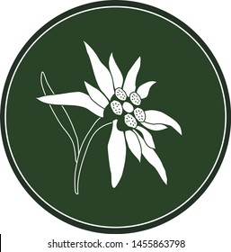 White logo edelweiss flower on a dark green background. Celtic astrological calendar of the druids. Symbol of a flower in a circle. For natural themes. Chalk drawing on blackboard