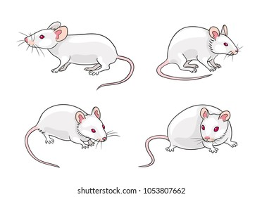 White mice in different poses. Vector illustration. EPS8