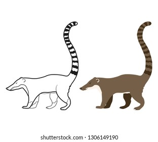 White Nosed Coati Vector Vector