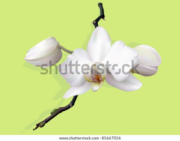 white orchid flower with buds on green background