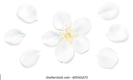 White pastel background with spring flower petals. Apple tree blossom petals illustration