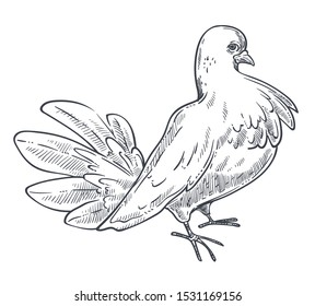 White pigeon, dove bird with fluffed feathers, standing side view, close up, detailed hand drawn sketch, isolated flat vector illustration on white background