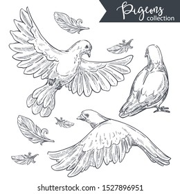 White pigeon, dove birds in motion, flying with open wings and standing back view. Feathers floating. Detailed hand drawn sketch, isolated flat vector illustration on white background.