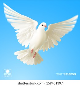 White pigeon, version 2.0
