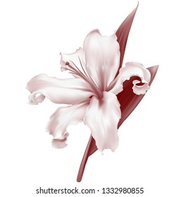 White pink lily flower realistic, isolated on white background, vector - Vector