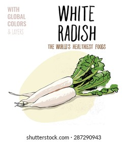 White Radish. Vector illustration Eps10 file. Global colors&layers.