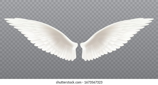 White realistic wings. Pair of white isolated angel style wings with feathers on transparent background, bird wings design - stock vector