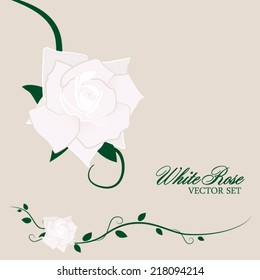 White Rose and Vines Vector Set