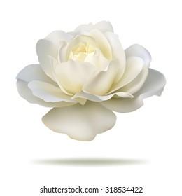 white rosebud isolated on white background in vector format.