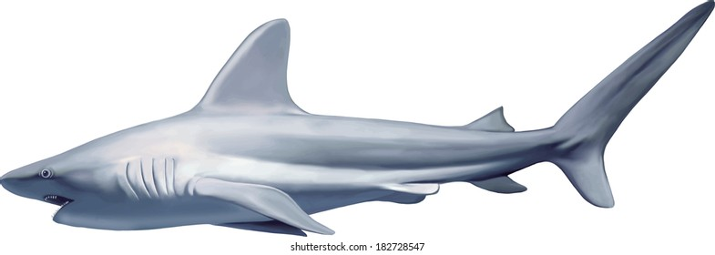 White Shark isolated on white background. Vector illustration