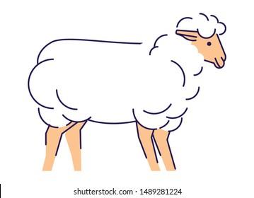 White sheep flat vector illustration. Livestock farming, domestic animal husbandry design element with outline. Merino ewe isolated on white background. Lamb meat, sheep wool production logo