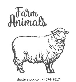 White sheep isolated, vector sketch drawn by hand on a light background, farm animals, cloven-hoofed livestock, sheep icon with thick fur,  sketch isolated