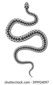 White snake vector