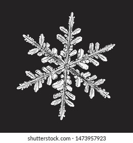 White snowflake isolated on black background. Vector illustration based on macro photo of real snow crystal: elegant stellar dendrite with hexagonal symmetry, complex ornate shape and six ornate arms.