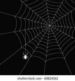 white  spider and spider web isolated on the  black background