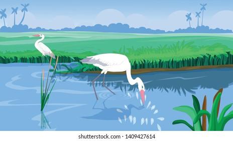 The white stork or egret roams in the lake - vector