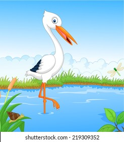 White stork searching food