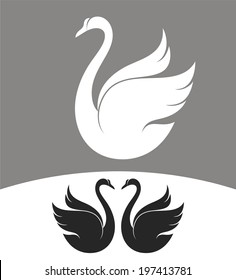 White swan and black swans. Vector illustration